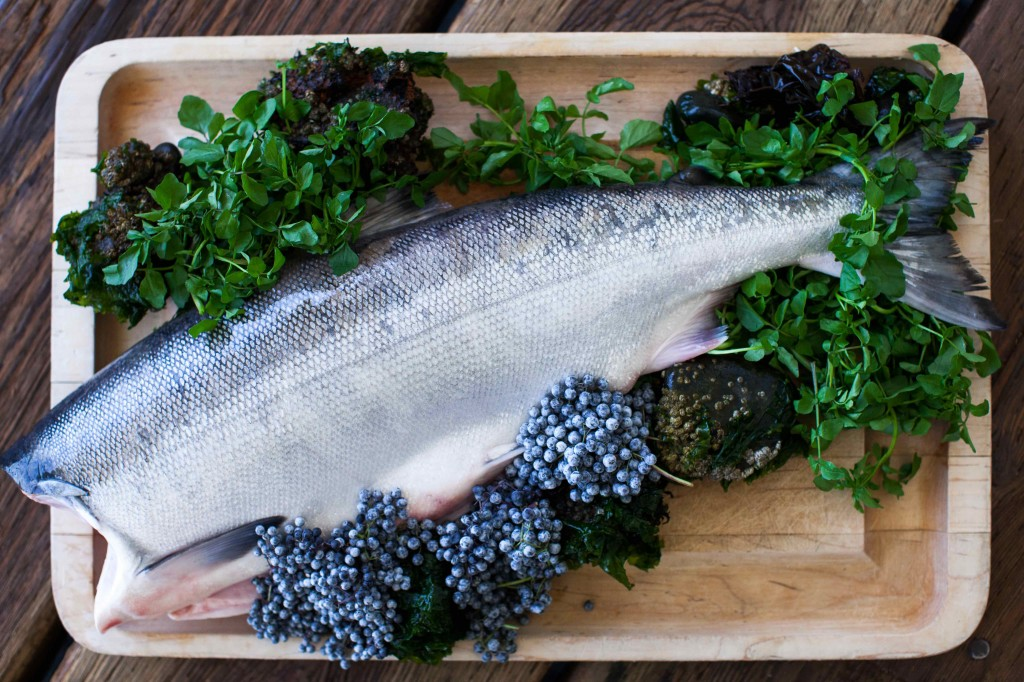 Fall Forage Salmon
