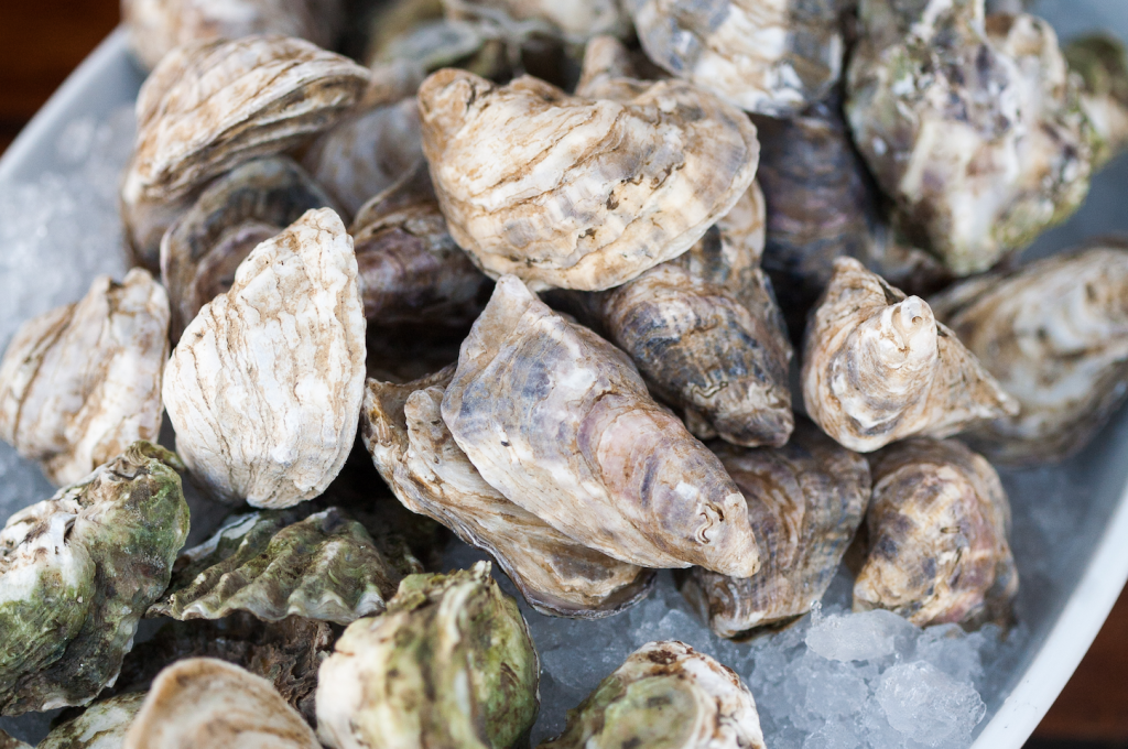 Oysters Unshucked